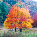 tree-fall-color